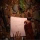 Magic Wood by Druyd